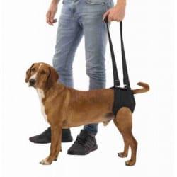 Aide à la marche pour chien