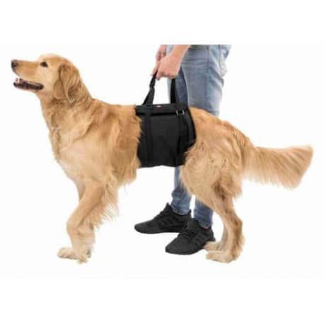 Aide à se relever pour chien