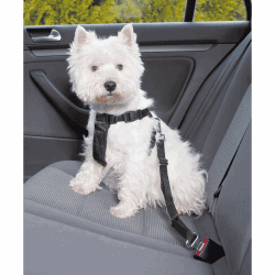 Harnais de sécurité routière pour chien