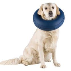 Collier gonflable bleu pour chien