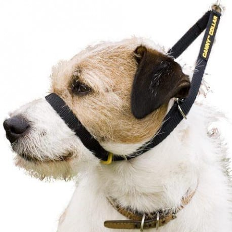 Collier pour chien Canny Collar