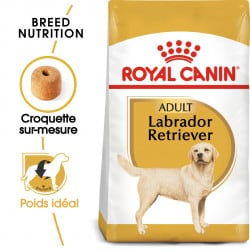 Croquettes pour Labrador Retriever adulte Royal canin