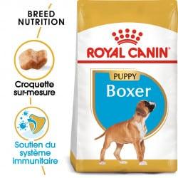 Croquettes pour chien Boxer junior Royal Canin
