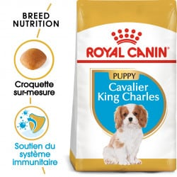 Croquettes pour chien Cavalier King Charles junior Royal Canin - 1,5kg