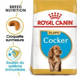 Croquettes pour chien Cocker Junior Royal Canin