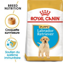 Croquettes pour Labrador Retriever junior Royal canin