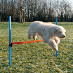 Obstacle agility - Haie agility pour chien