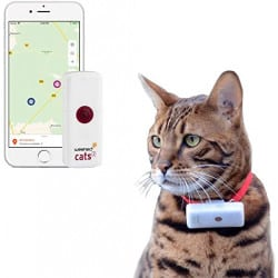GPS Weenect pour chat
