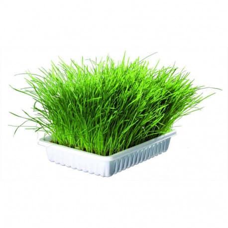 Bac d'herbe à chat Trixie, 100g - Aide à la digestion du chaton