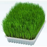 Bac d'herbe à chat Trixie, 100g - Aide à la digestion du chat