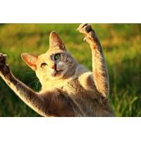 Coupes griffes pour chat