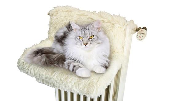 coussin pour chat