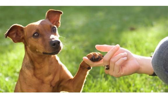 Accessoires d'éducation canine