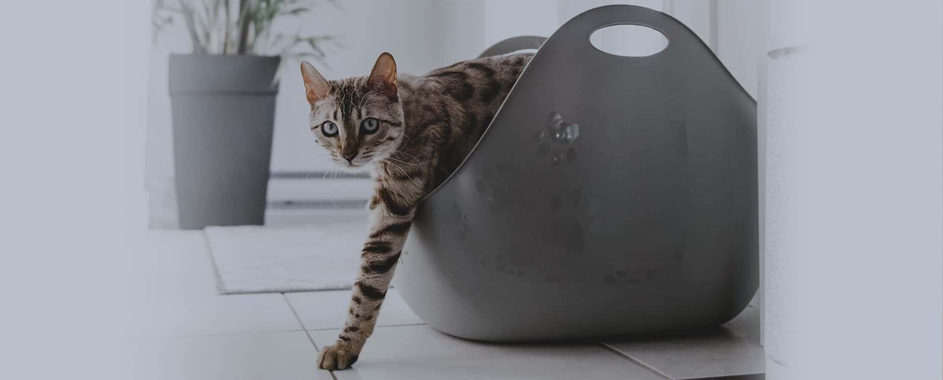 Litieres pour chat