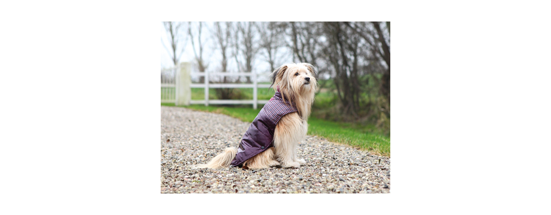 La nouvelle collection de manteaux pour chien !