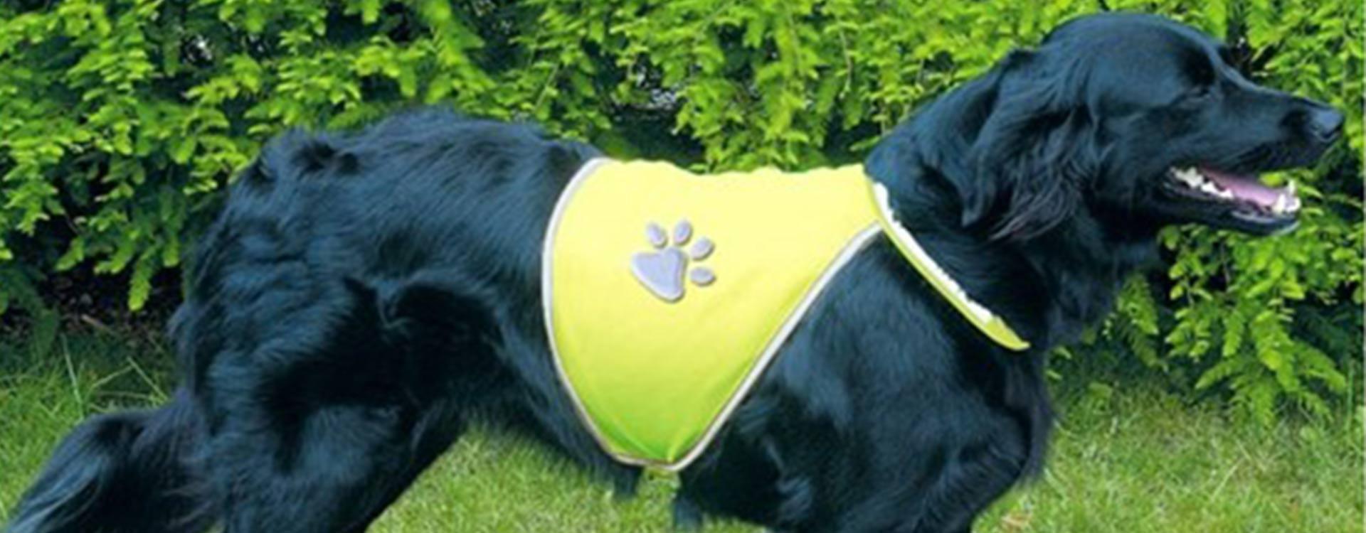 Gilet de sécurité pour chien