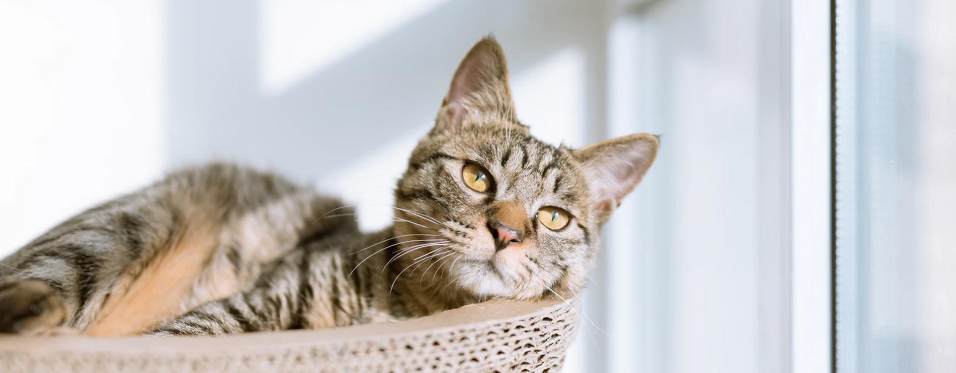 Mon chat tousse / mon chat éternue