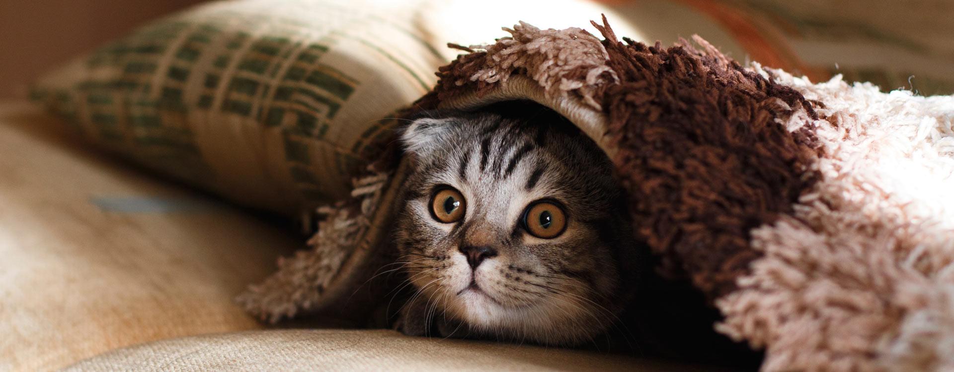 Comment faire si mon chat ou mon chaton n'est pas propre ?