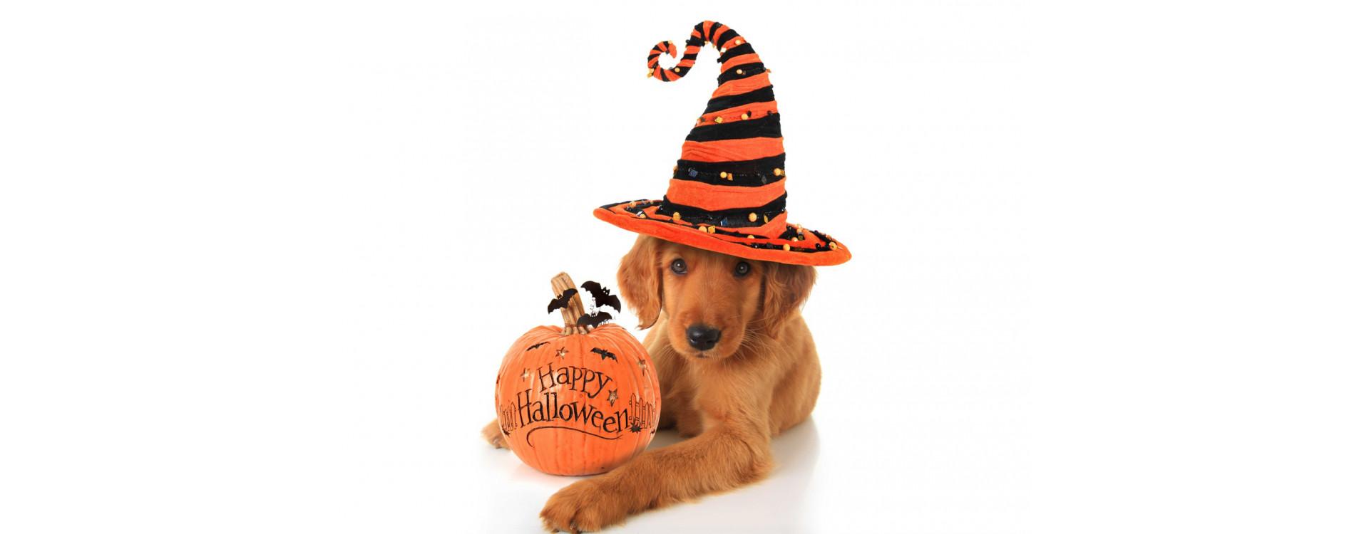 Venez fêter Halloween en magasin le samedi 31 octobre