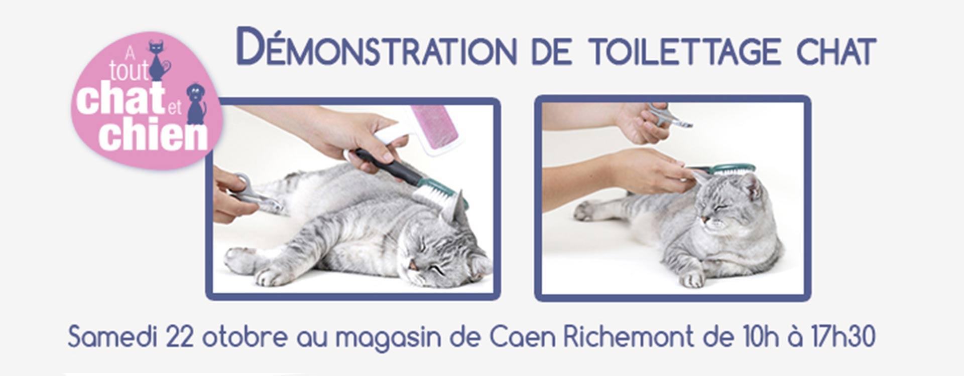 Animation toilettage félin - Caen Richemont