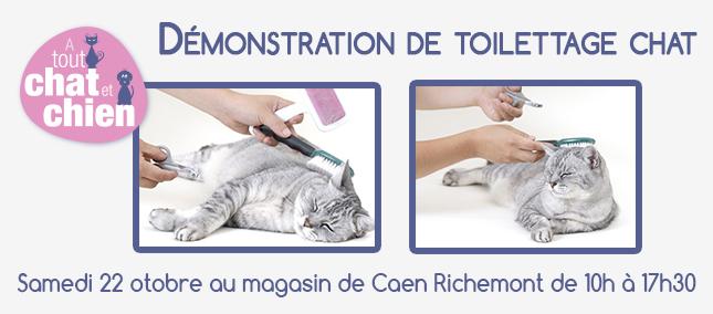 toilettage-chaton